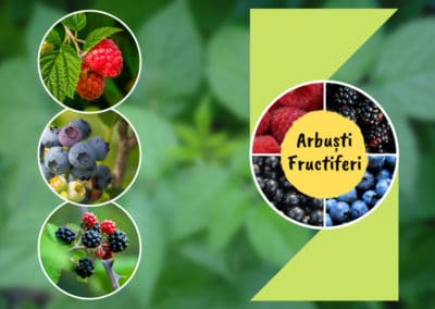 Arbuști Fructiferi (logo, Facebook page creation, social media marketing & more)